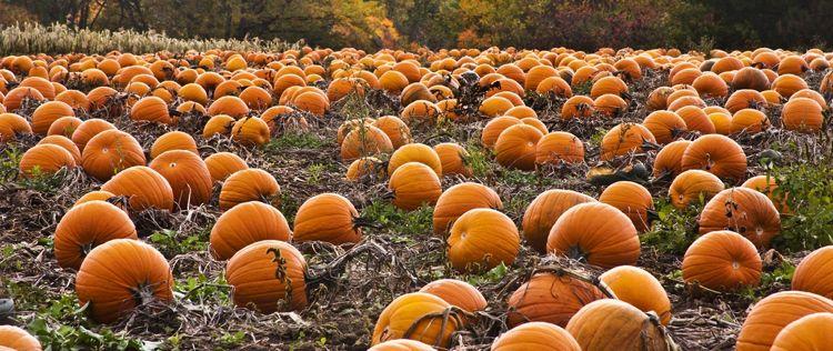 Saisonrezept Oktober: Kürbis