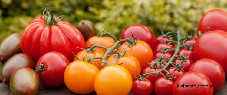 EcoTopTen Saisonrezept August: frische Tomaten