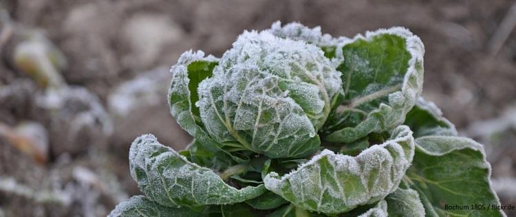 EcoTopTen-Saisonrezept Dezember: Kohl