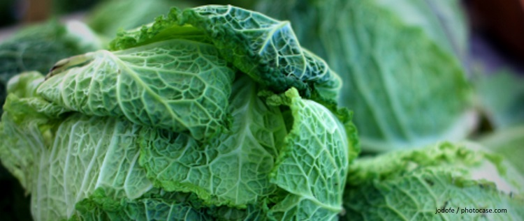 EcoTopTen Saisonrezept November: Wirsing
